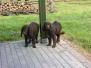 Psy na Kaczkach 2010